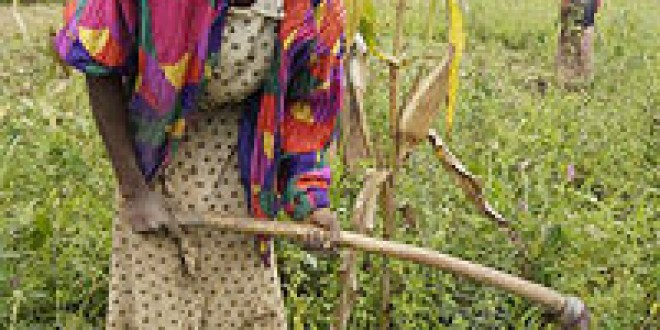 Seven trends likely to shape African agriculture in the coming years