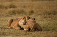 View the album Wildlife In Kenya